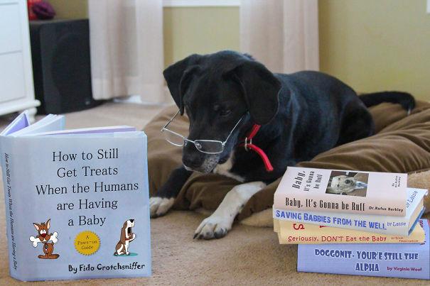 annonce bébé chien