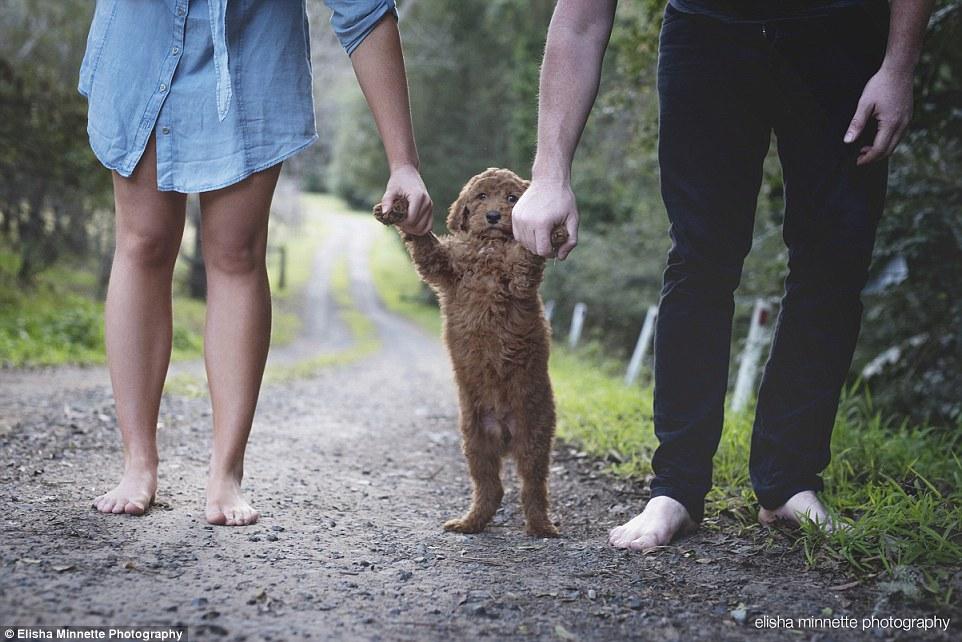 seance photo matt aby et leur chien 10