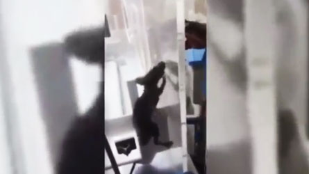 rat incubateur