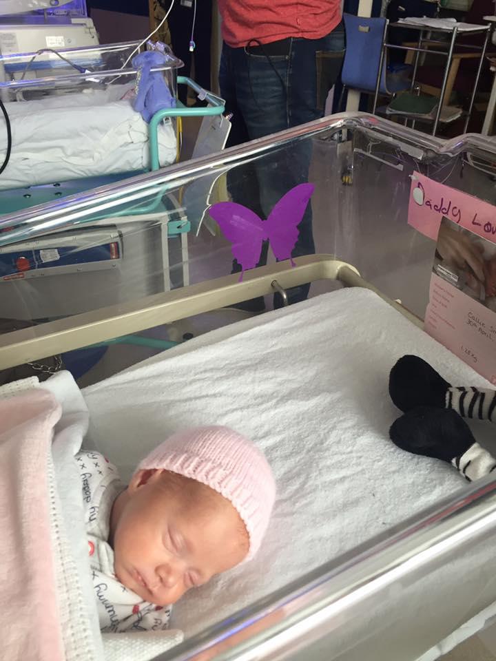 papillon-violet-jumeaux-decede