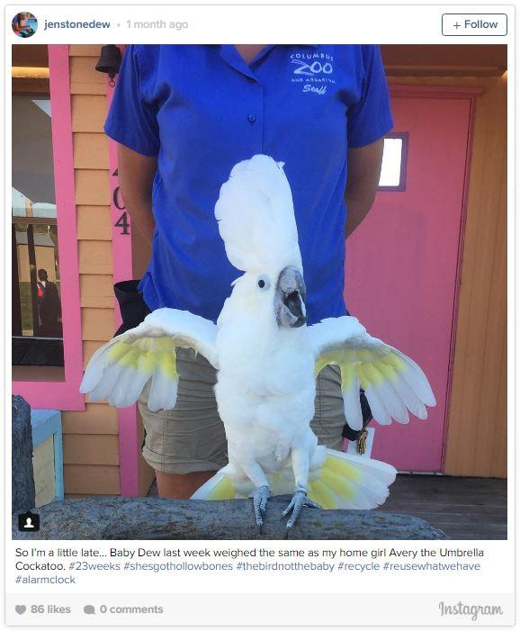 gardienne zoo illustre sa grossesse semaine apres semaine avec des animaux 23 semaines