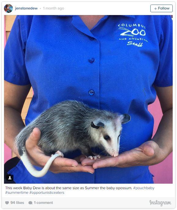 gardienne zoo illustre sa grossesse semaine apres semaine avec des animaux 24 semaines
