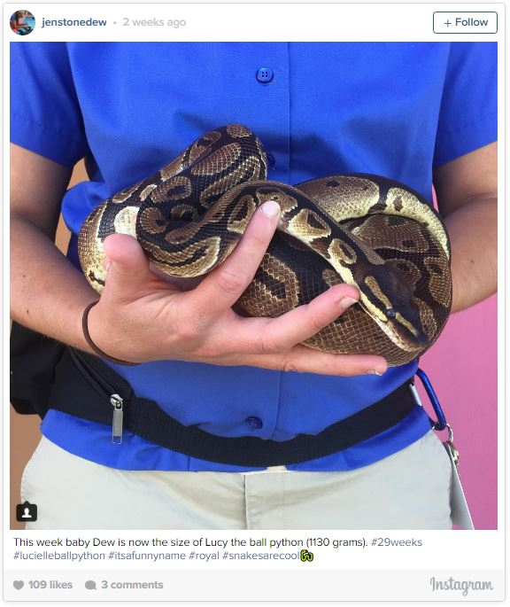 gardienne zoo illustre sa grossesse semaine apres semaine avec des animaux 29 semaines