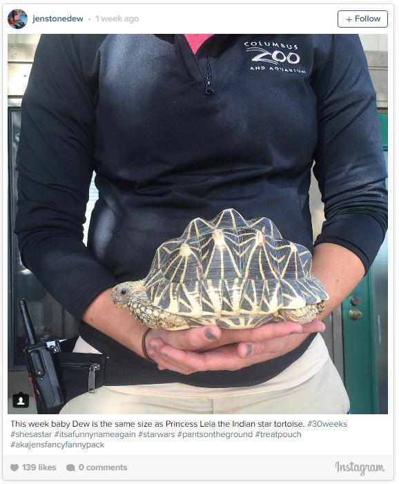 gardienne zoo illustre sa grossesse semaine apres semaine avec des animaux 30 semaines