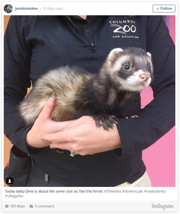 gardienne zoo illustre sa grossesse semaine apres semaine avec des animaux 31 semaines