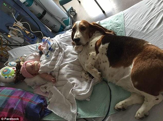 victime d un avc cette petite vit ses derniers instants en compagnie de ses chiens 1