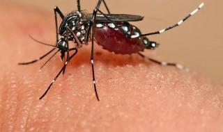 La France est-elle concernée par le danger du virus Zika pour les femmes enceintes ?