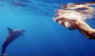 Cette future maman veut un dauphin comme sage-femme !