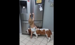 Elle filme son fils monter de manière très dangereuse sur le chien pour ouvrir le frigo : sa vidéo fait débat !