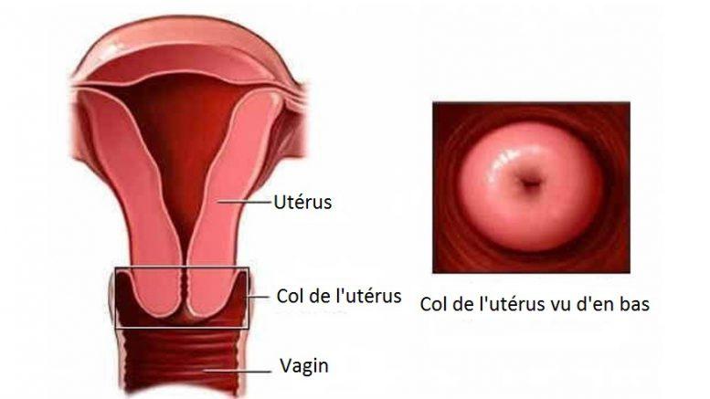 Image result for col de l'utérus enceinte