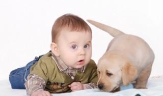 Comment faire cohabiter bébé et animaux domestiques?