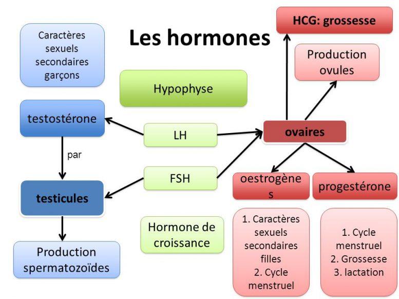 FSH - Neufmois.fr