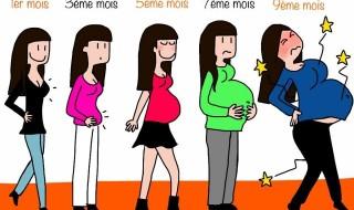 La grossesse au fil des mois