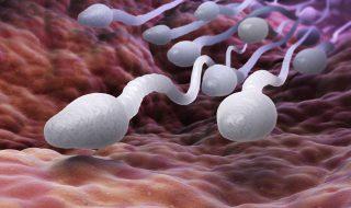 Fertilité : on en sait plus sur la mobilité des spermatozoïdes !