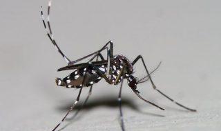 Enceinte ou jeune maman: faites la chasse au moustique tigre!