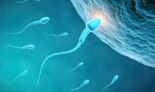 Des spermatozoïdes humains à partir de cellules de la peau : vers la fin de l'infertilité masculine ?