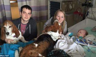 L'amour de ces deux chiens pour leur petite maîtresse mourante nous a vraiment ému