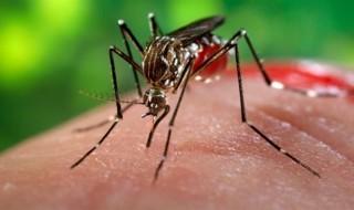 Marisol Touraine veut éviter une épidémie de Zika, dangereux pour la femme enceinte