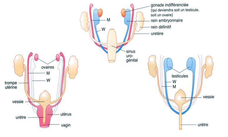 sexe a 3 la pénétration sexuelle