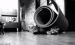 Ta première séance de yoga prénatal vs ta dixième séance… illustrées en chatons
