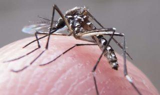 Etats-Unis : plus de 400 femmes enceintes et 7 nourrissons touchés par Zika