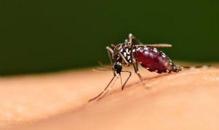 Zika : bientôt un test de dépistage en quelques heures ?